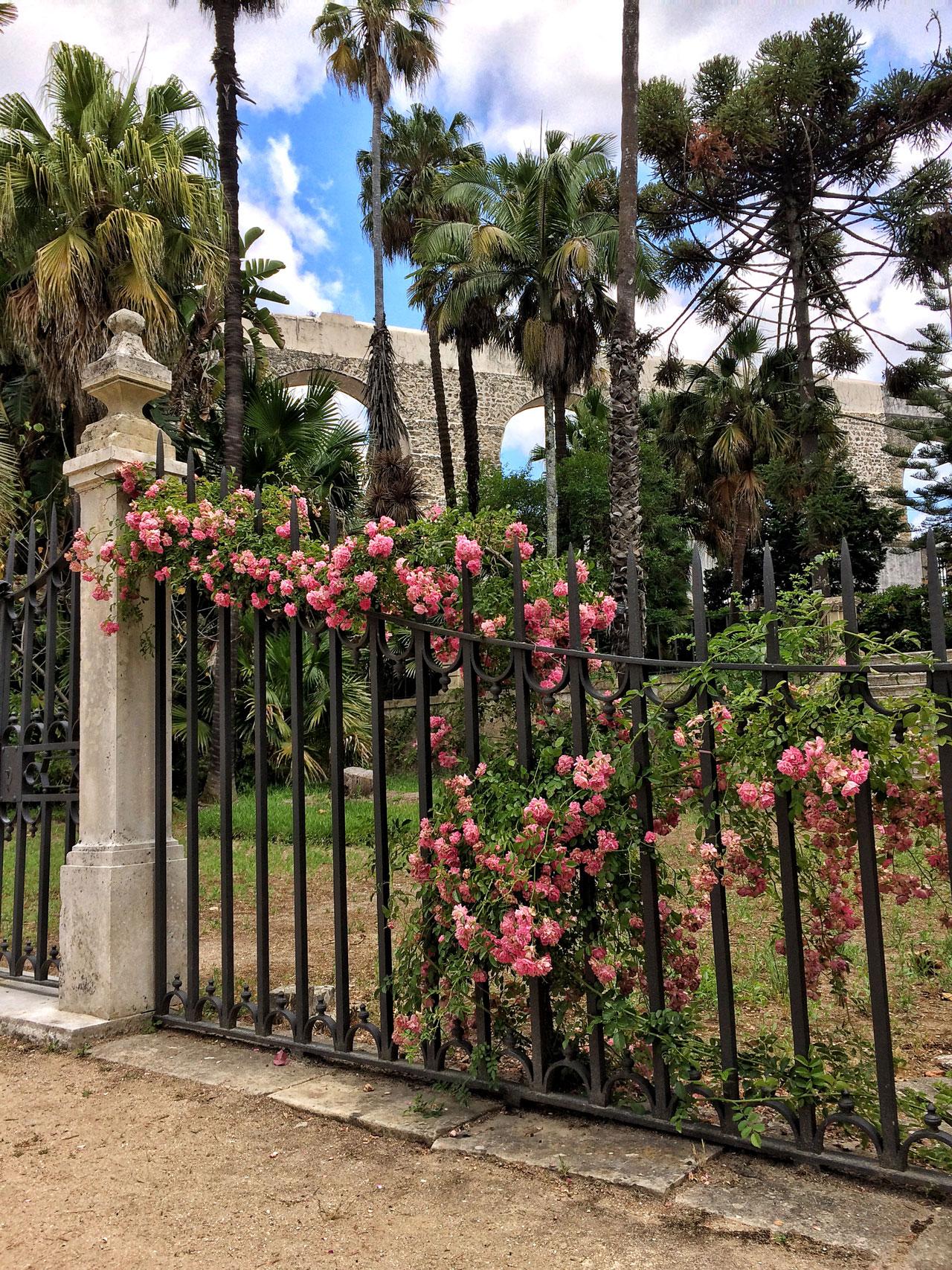 Coimbra Portugal Botanischer Garten