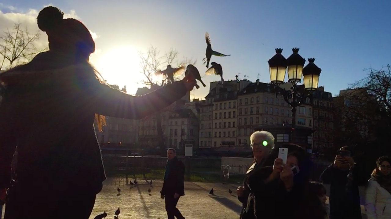 Die Vögel der Notre Dame in Paris