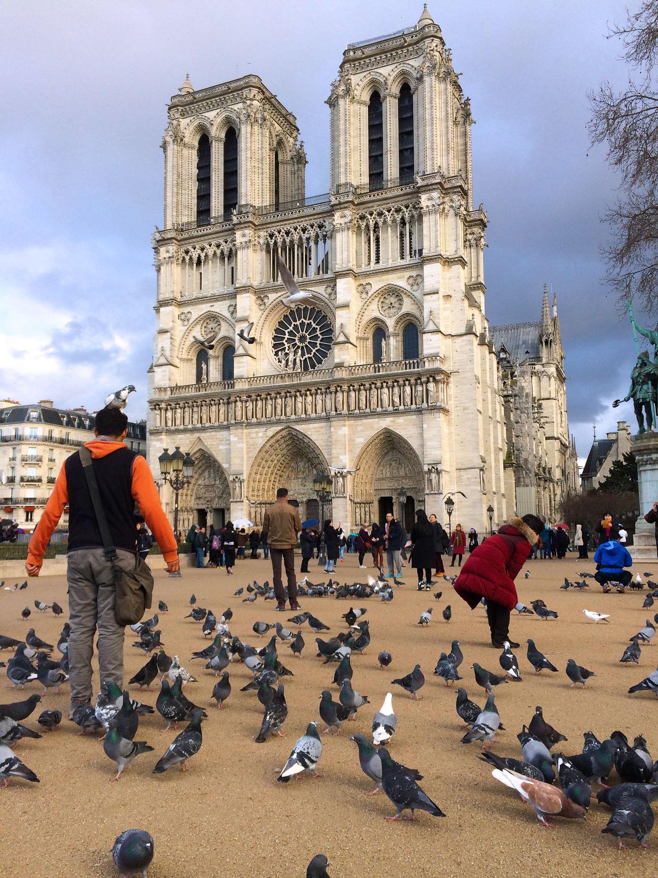 Vorplatz Notre Dame Tauben