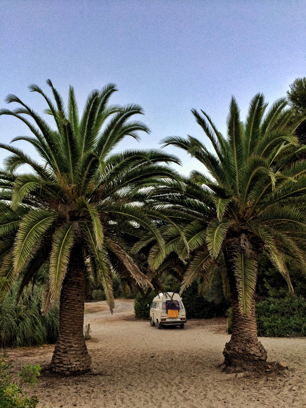 Unser lauschiges Plätzchen, neben den zwei riesigen Palmen auf Mallorca.