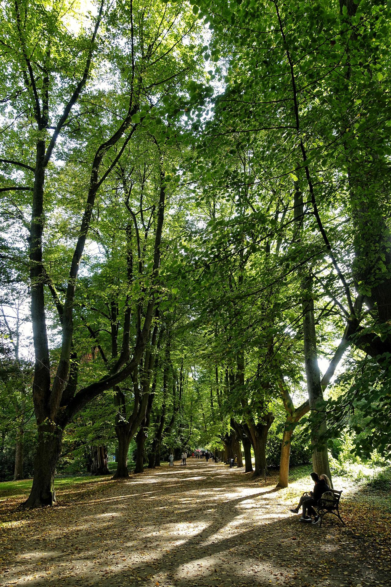 Rombergpark Park Dortmund