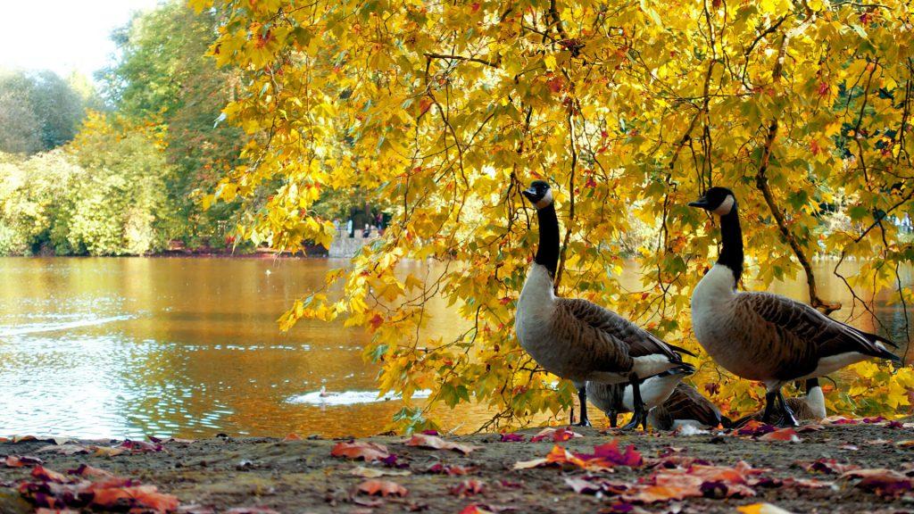 Park Dortmund Rombergpark