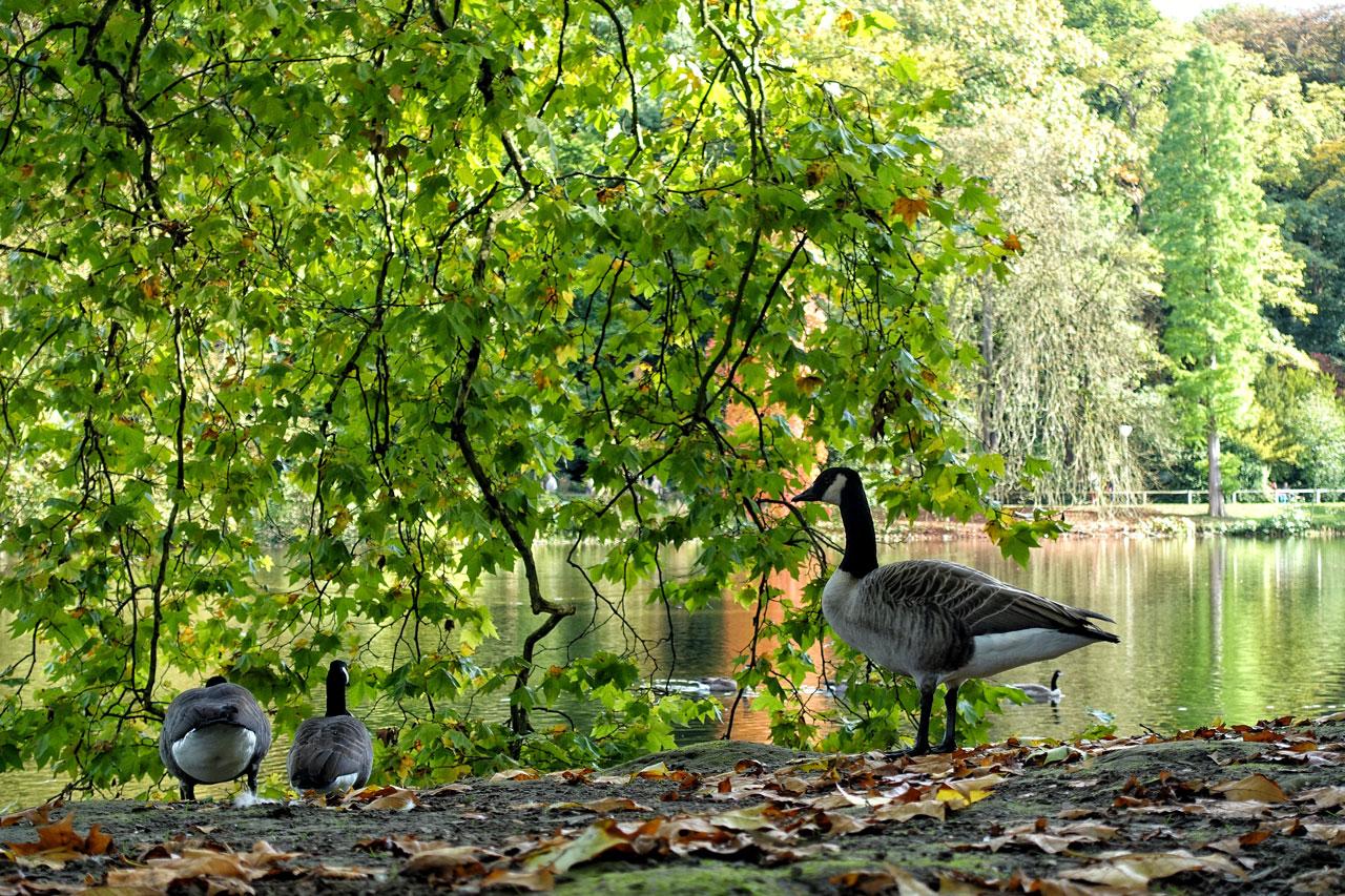 Parks in Dortmund: Rombergpark