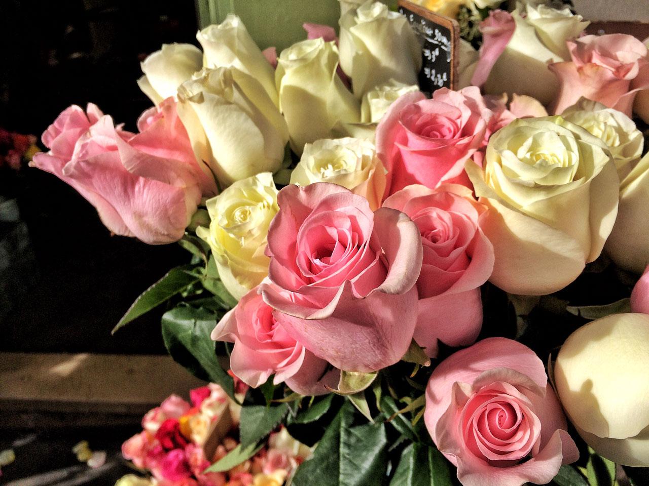 Rosen im Pariser Viertel Montmartre