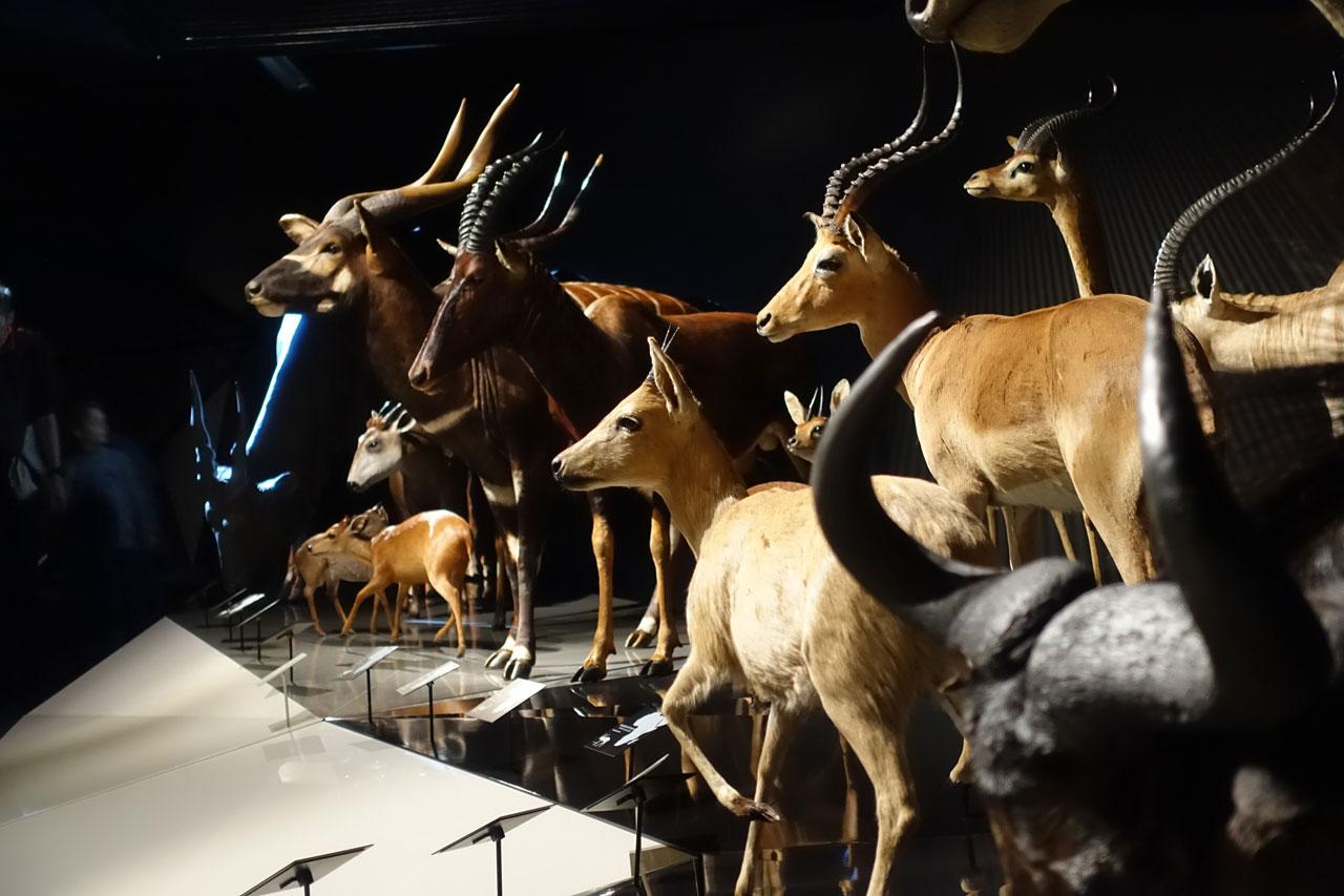 Musee de Confluence in Lyon. Wildtiere
