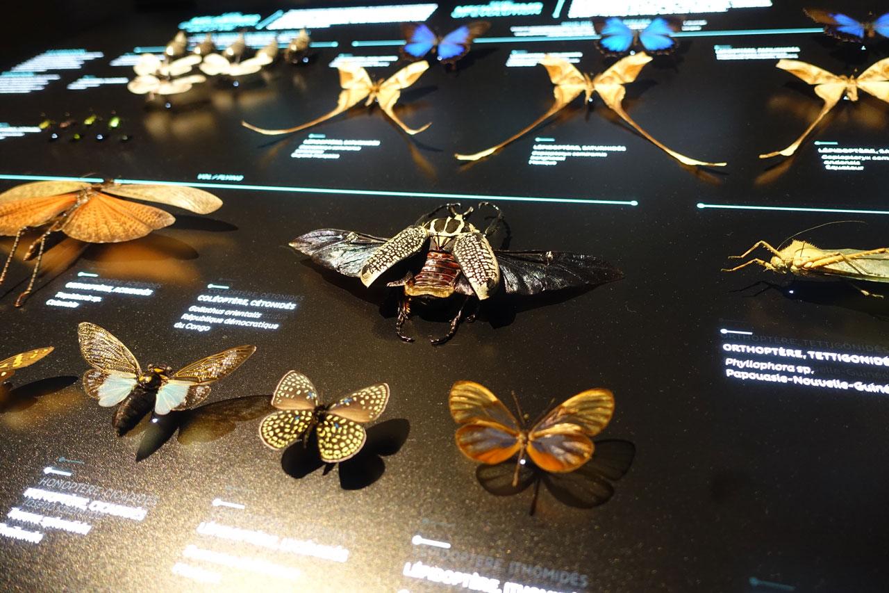 Musee de Confluence in Lyon. Schmetterlinge und Nachtfalter
