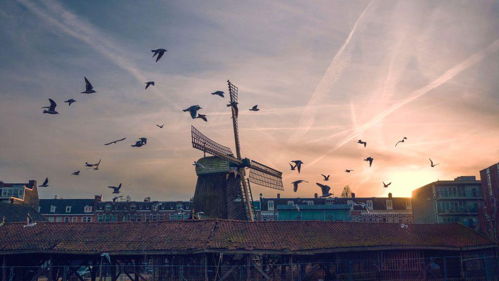 Windmühle in den Niedelranden bei Sonnenuntergang