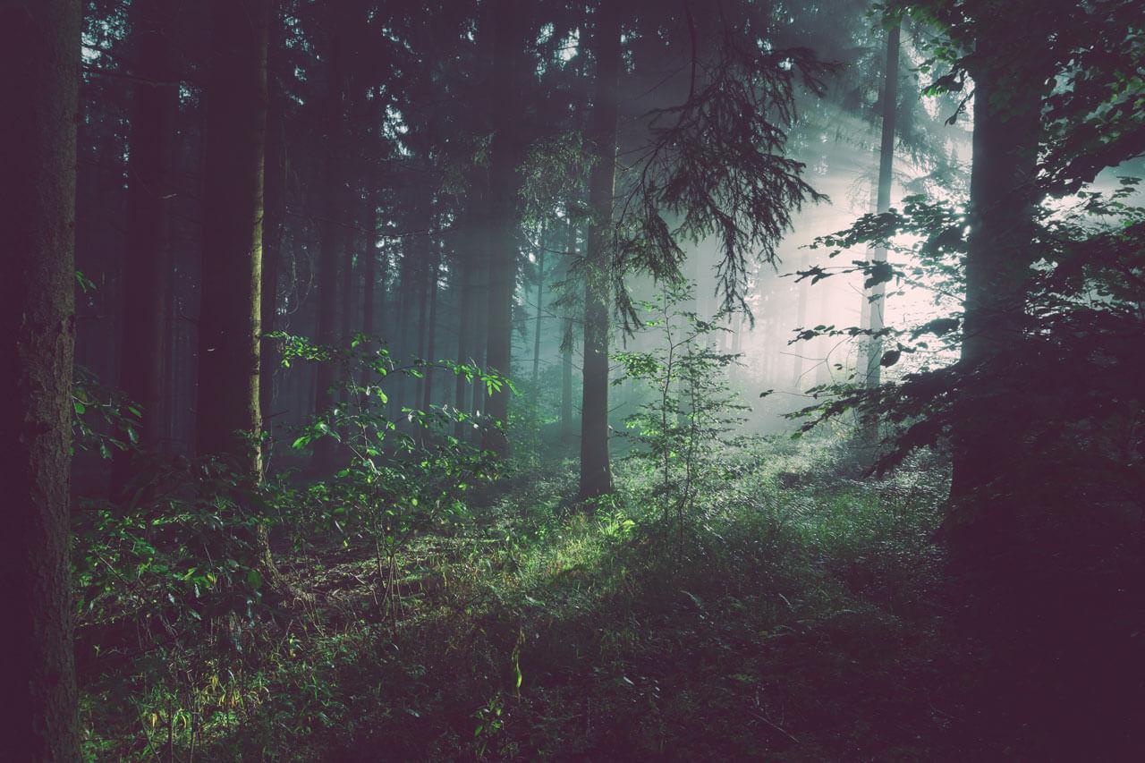 Ein Wald im Sauerland Deutschland